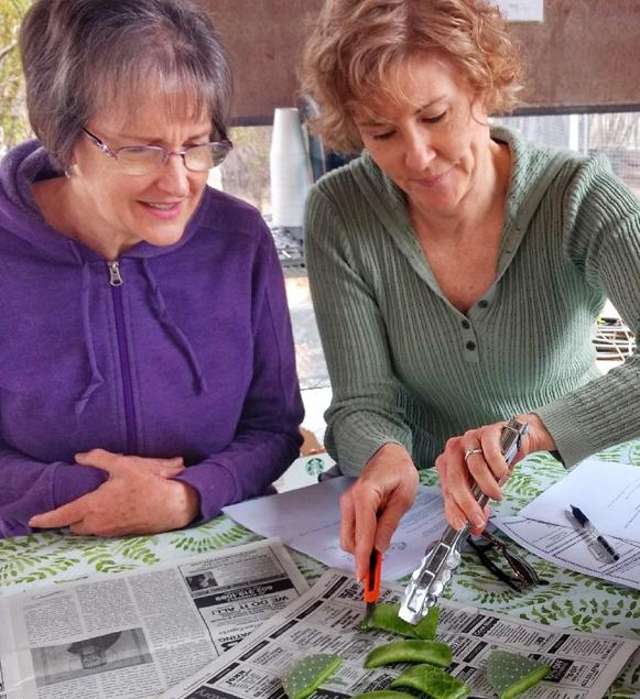 Medicine Plants of the Desert Workshop - April 8th!