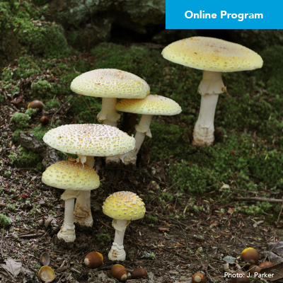 Ecological Importance of Fungi Webinar  – Click Here to Register