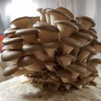 Nebraska Mushroom LLC