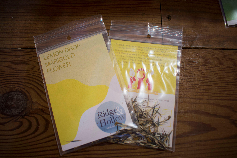 French Lemondrop Marigold
