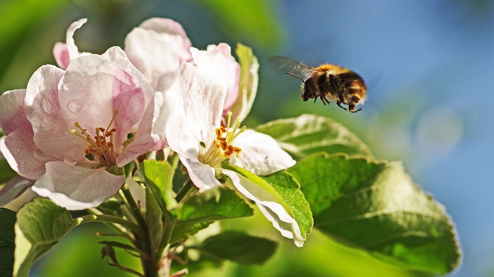 Get to know RI's Pollinators