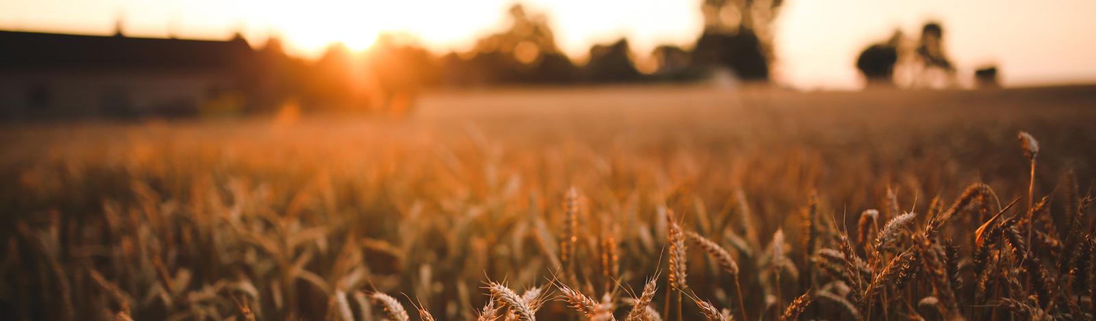 A Kansas landscape at sundown