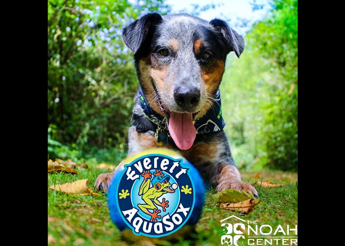 AquaSox Bark in the Park-July 24th