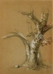 Study of a Blasted Tree