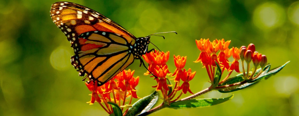 Migrating birds and butterflies