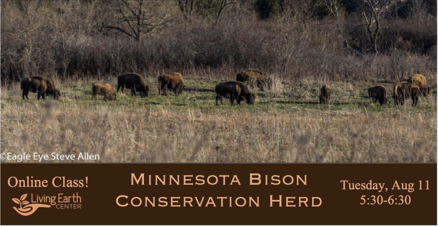 Online Class - Minnesota Bison Conservation Herd