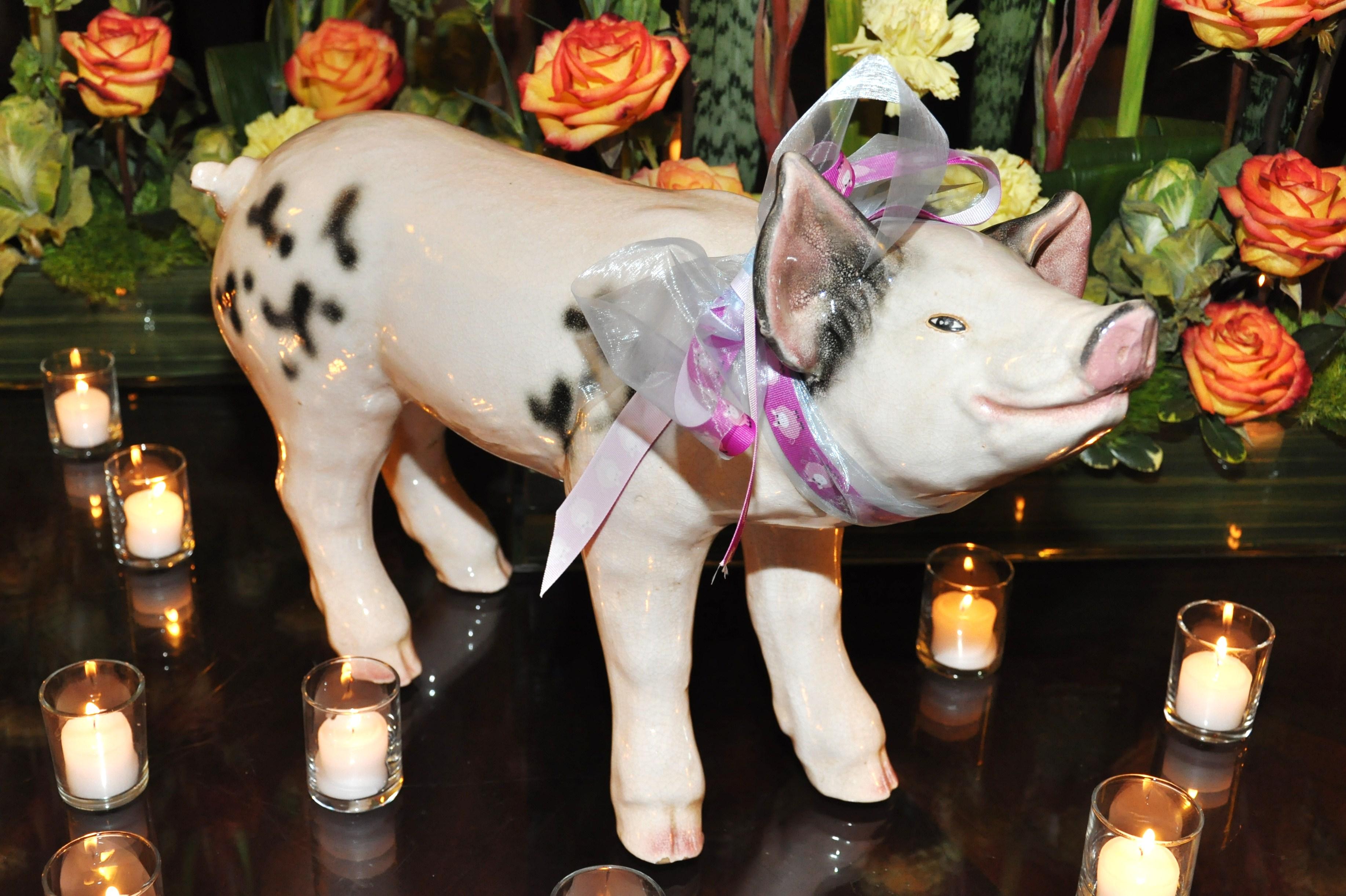 Pig Display
