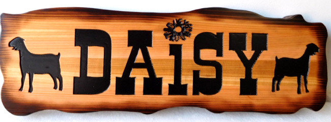 "O24412 - Rustic (Scorched) Cedar Wood Sign for Goat Farm , ""Daisy"""