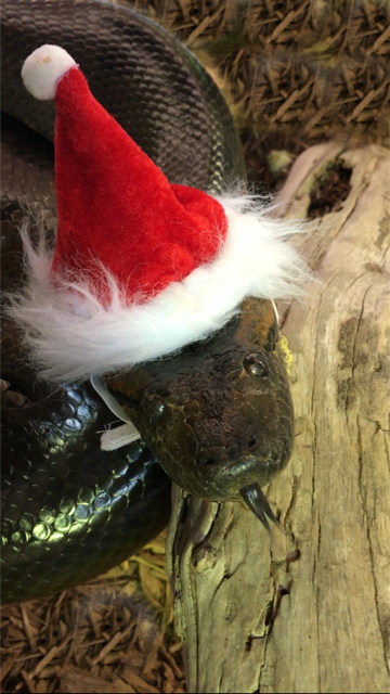 1PM Special Snake Holiday Tour