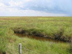 Mundy Marsh