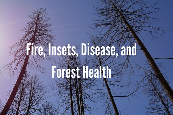 Fire, Insets, Disease, and Forest Health