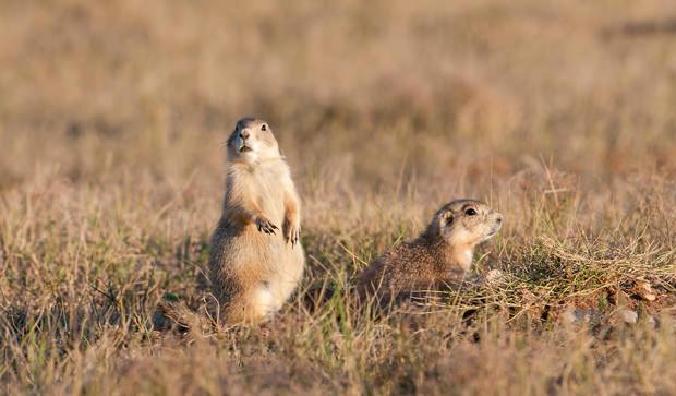 The Prairie's Namesake