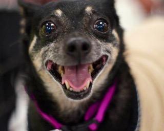 From Karen Ash to the Dog Program