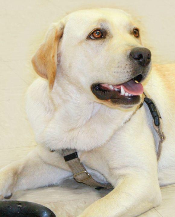 Celebrating International Assistance DogWeek (IADW)