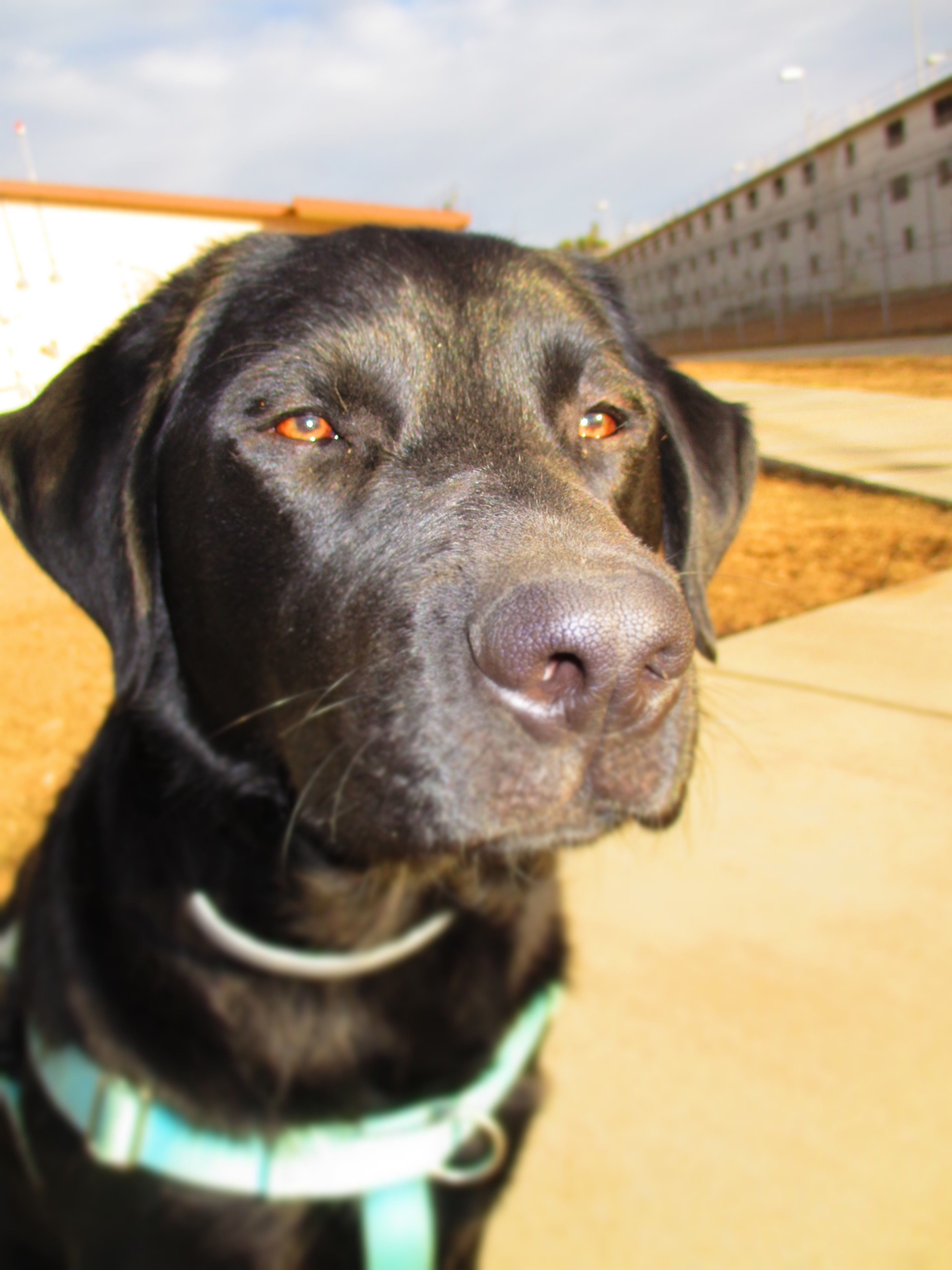 How Prison-Based Animal Programs (PAPs) are Assisting with a Growing Demand for Service Dogs