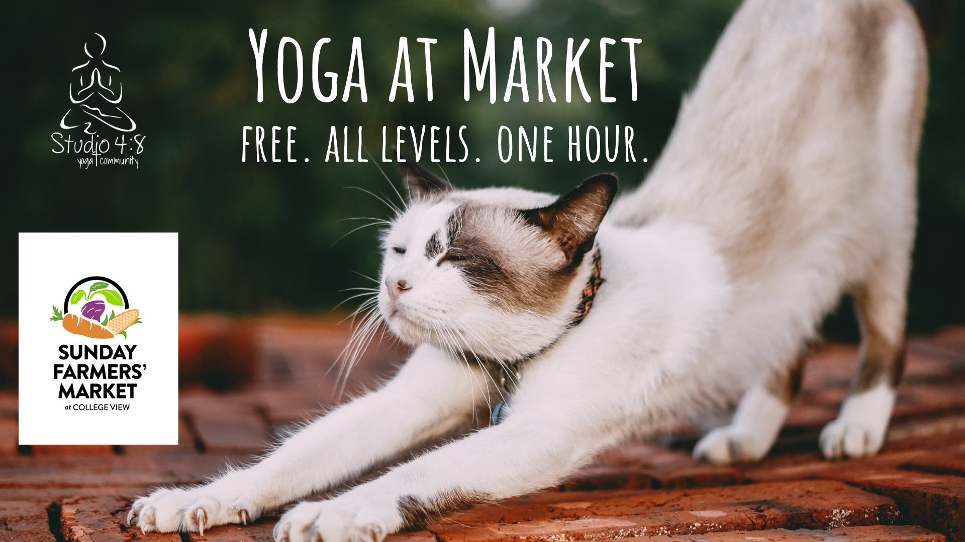 Yoga at the Market with Lindsay Daniels of Studio 4:8