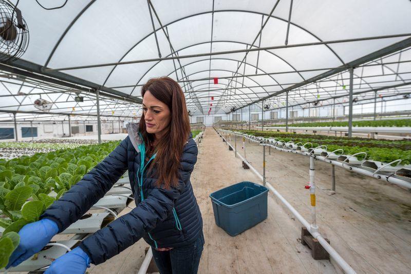 Solutions Farm