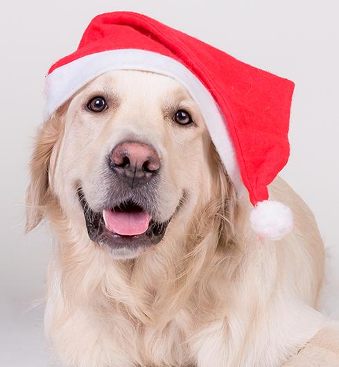 Santa Photos and Holiday Gift Fair