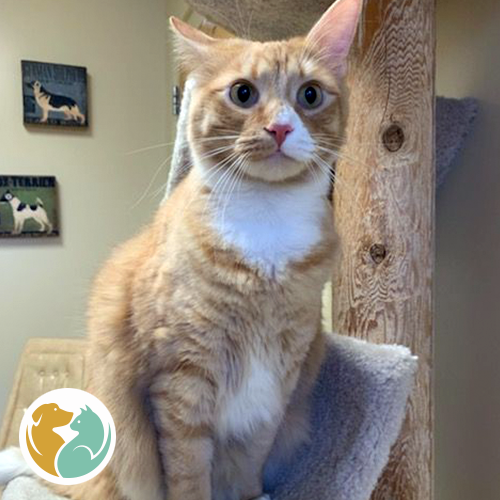 LIAM- Adopted 1-16!!
