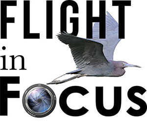 Flight in Focus