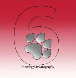 Special Thank You to Alex from Six Legged Photography for the amazing photos and support of WCHS!