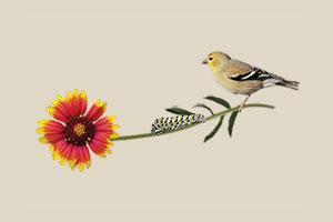 Gala Video Features Bird-Friendly Communities