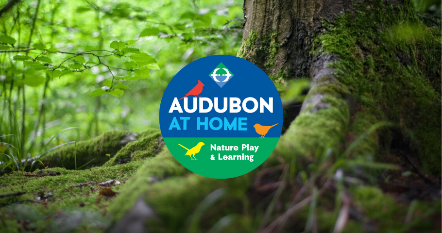 Audubon at Home: Nature Play and Learning in Rhode Island