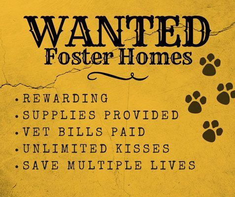 Wanted: Fosters!
