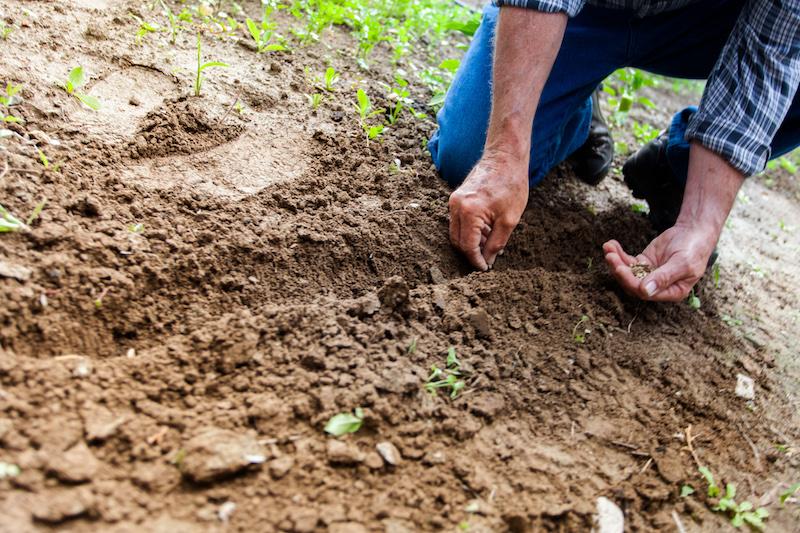 Spring Has Sprung: Why You Should Plant a Garden