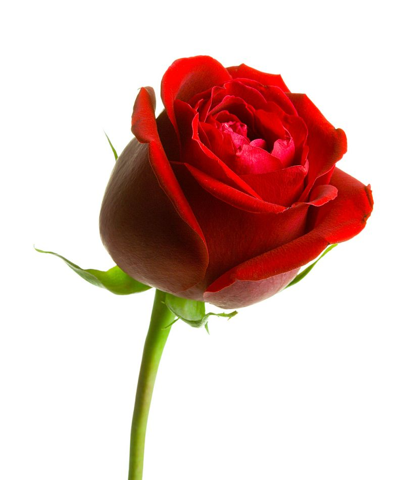 Backstage Roses