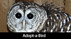Adopt-a-Bird logo