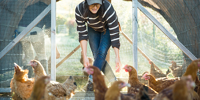 Backyard Family Farm Skills: September