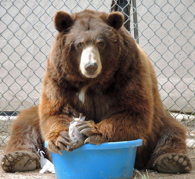 Black Bear's Best Friend