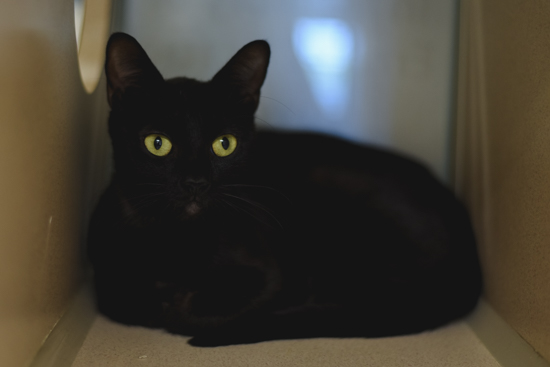 Jasmine - Meet me at the 56th & Hwy 2 Petco!