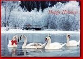 The Holiday Card Website