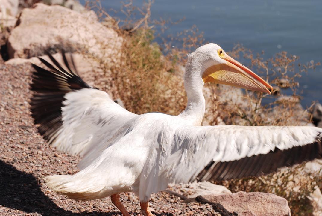 Wild Bird Rescue & Rehab : Home