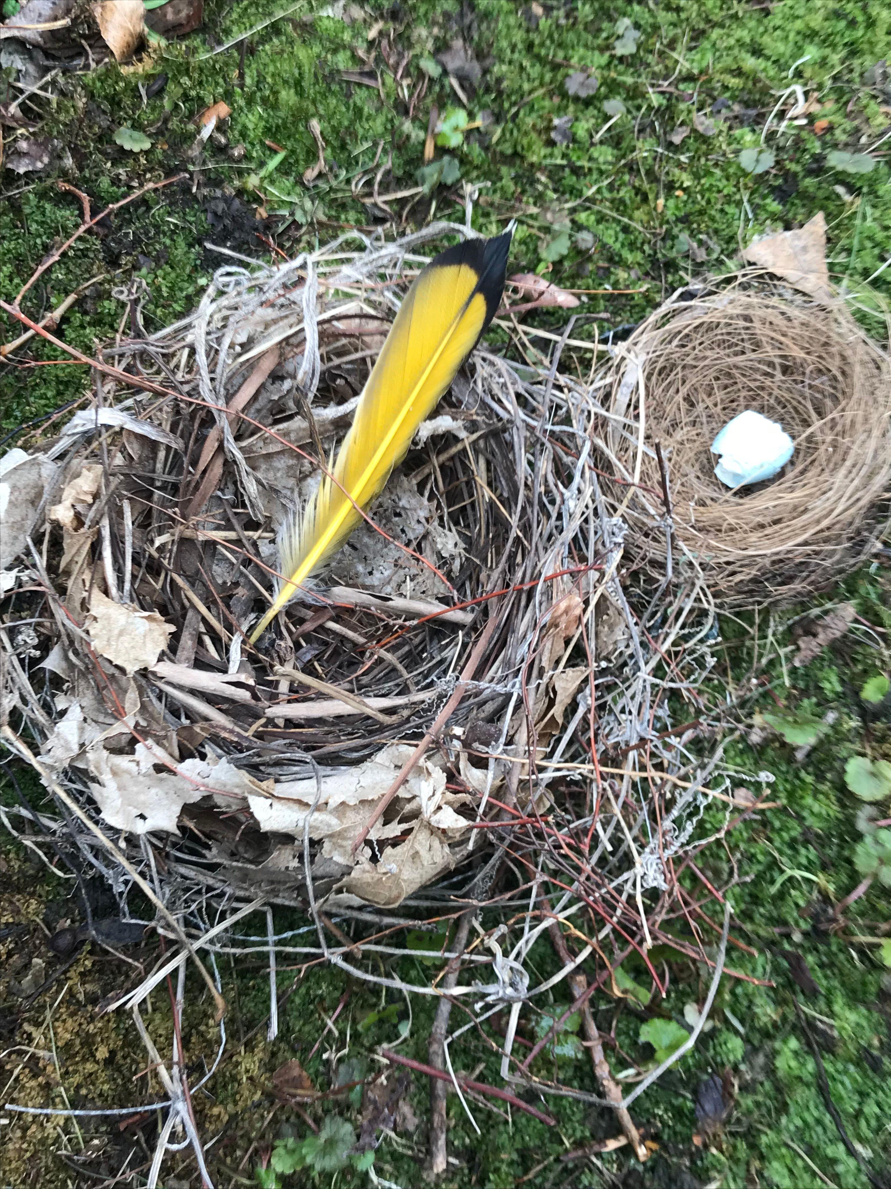 Online Kids Class - Nests and Backyard Treasures