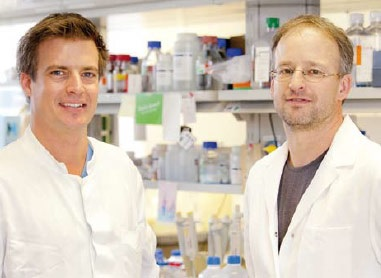 2012 GRANT – FINAL REPORT FROM DR. LANKISCH AND DR. METZGER, HANNOVER MEDICAL SCHOOL