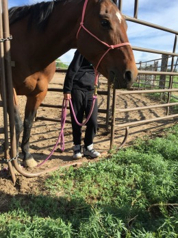 Individual Equine Assisted Learning