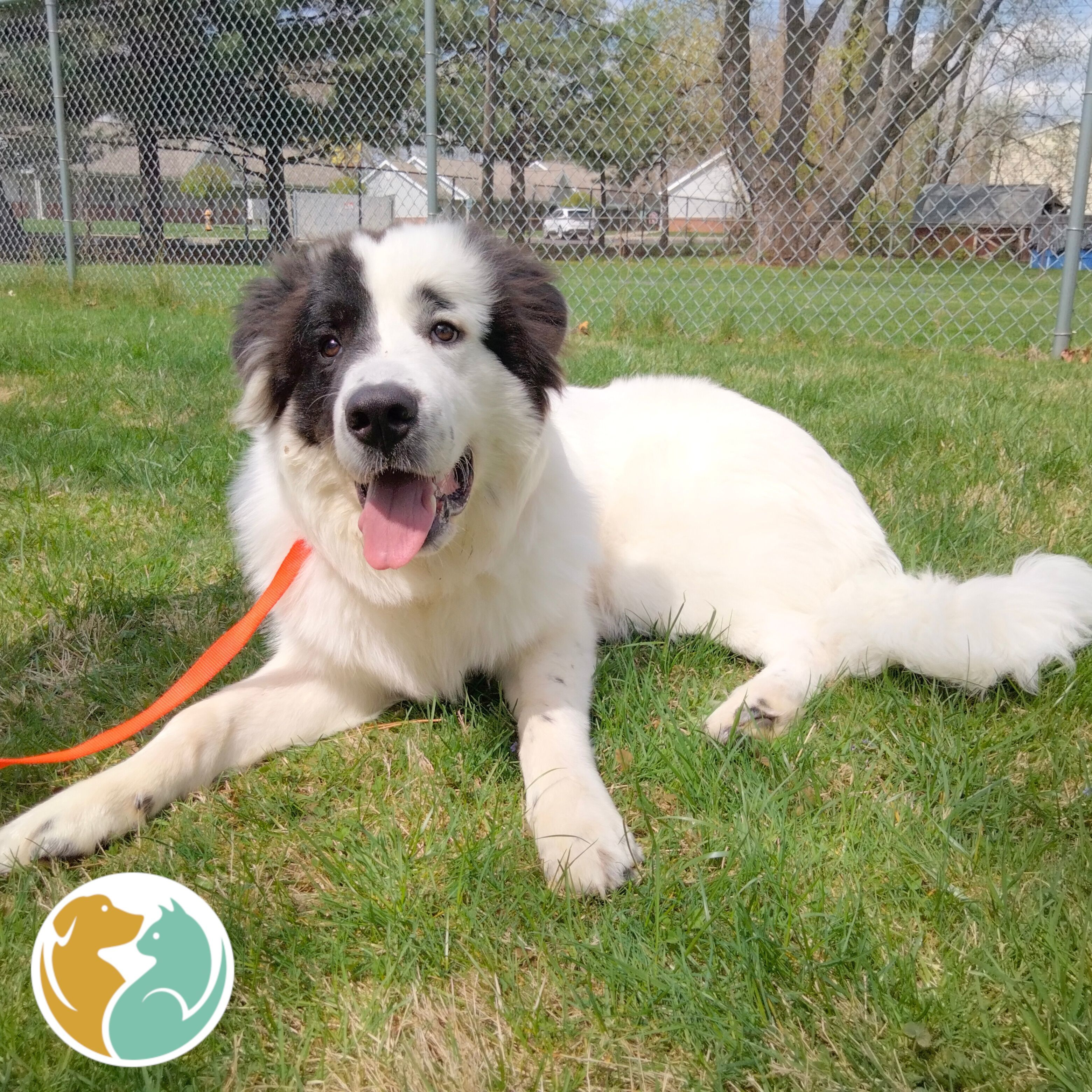 HARVEY - Adoption Pending!