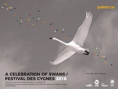 A Celebration of Swans, Yukon