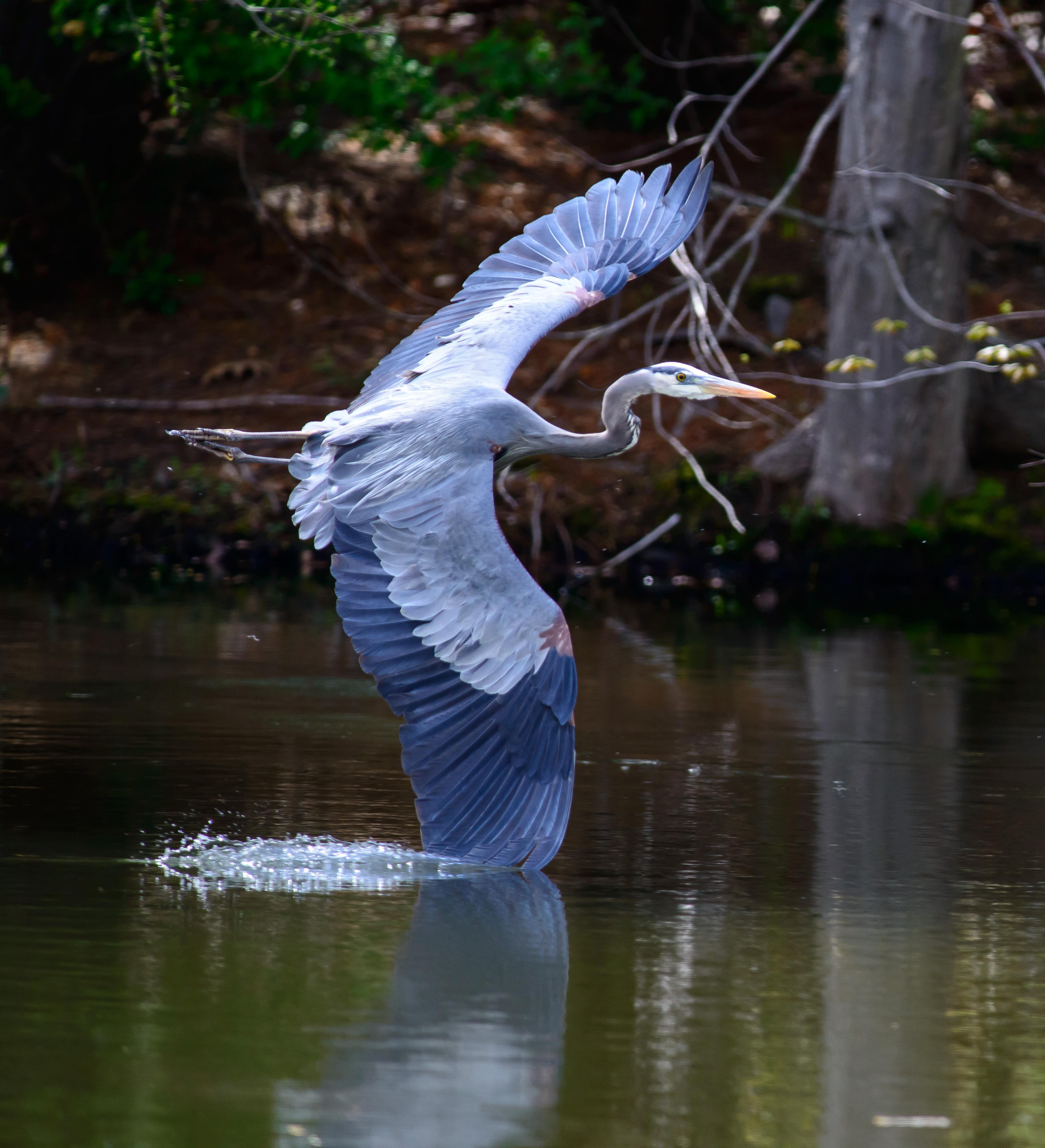 Audubon Keeps it Cool in July!