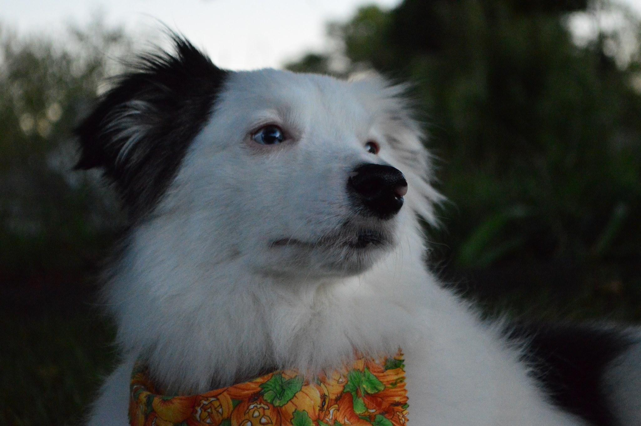 Tucker (TD)
