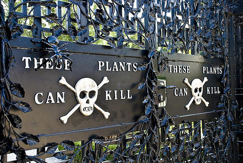 Welcome to the Poison Garden:Medicine's Medieval Roots