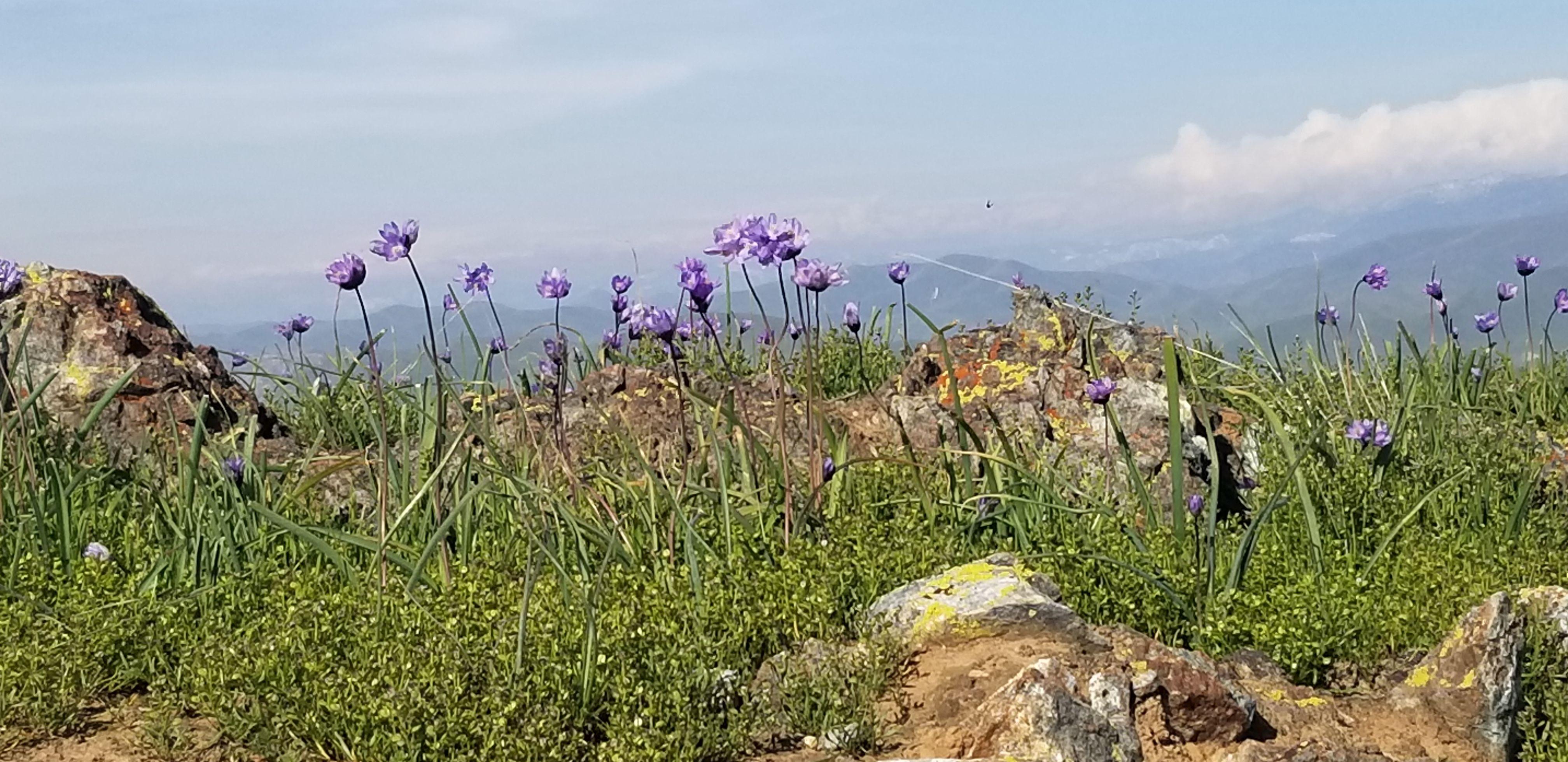 Lewis Hill Rare Wildflower Walk