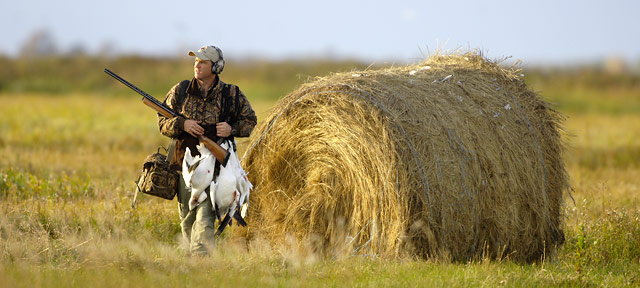 Do you need lots of decoys and electronic calls to hunt snow geese?