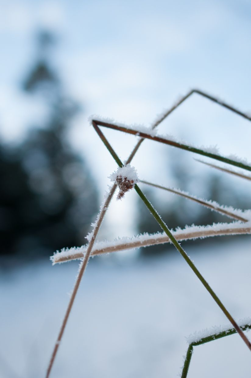 Whitman 8, Grass with Ice