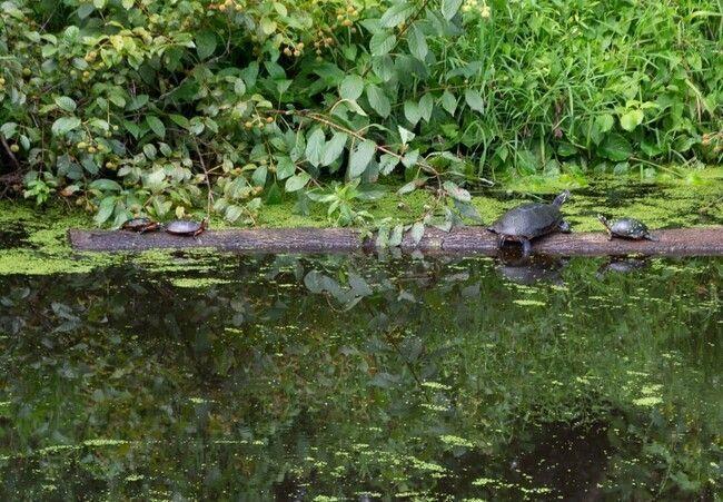 Arboretum wetland