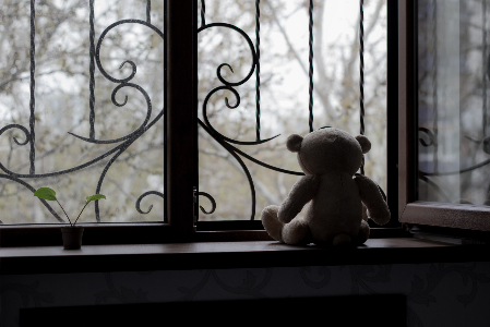 Trauma Statistics_Teddy Bear Looking Out Window