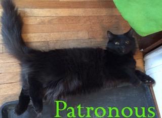 Patronus adopted 051918